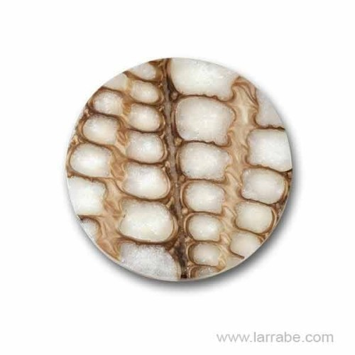 Moneda Mediana Naturalize Manga Ivory NAT-MA-24-M